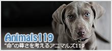 アニマルズ119